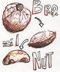 brazilnut