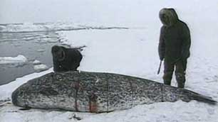How does an Inuit diet of nearly all Saturated Fat result in nearly no Cholesterol?