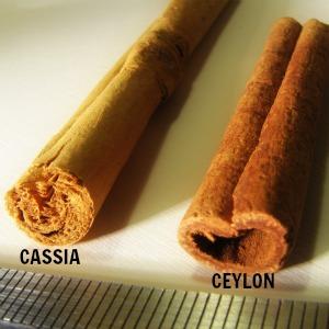 Cinnamomum_vs